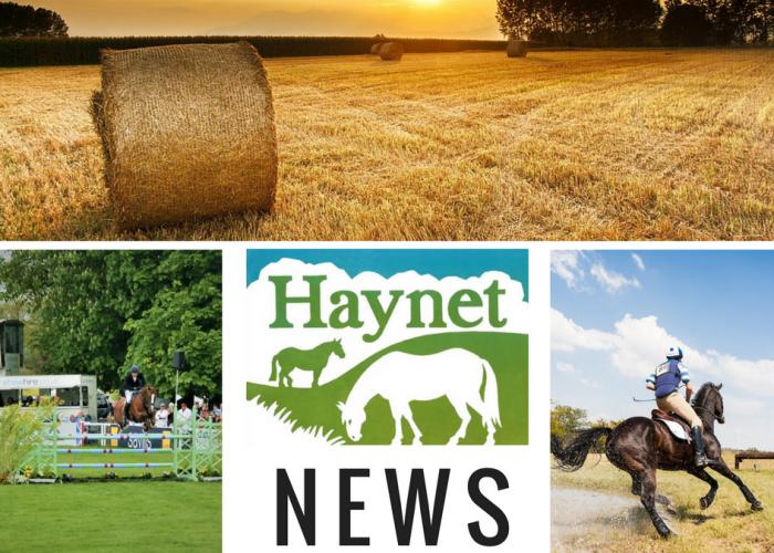 HAYNET NEWS (13)